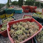 Wine-Making Prospects: Specialist predicts increased volumes, lower quality of wine after Armenia joins EEU