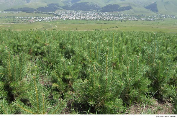 Planting a Future: ATP builds foundation for self-sustaining forests