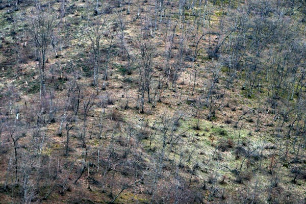 Green concerns: Armenian environmentalists alarm forestland may disappear by 2020