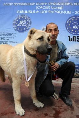 "Armenian Gampr wins dog ""beauty contest"" in Yerevan"