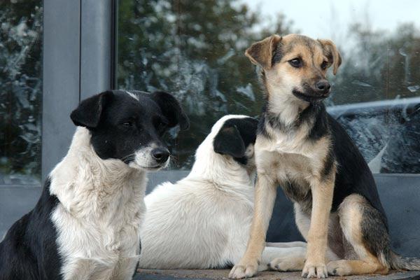 Մտահոգություններ կենդանիների շուրջ. մայրաքաղաքում թափառող շները շարունակում են մնալ քննարկման առարկա